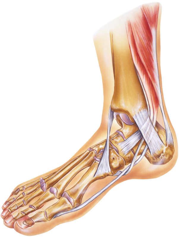 ayak bileği protezi